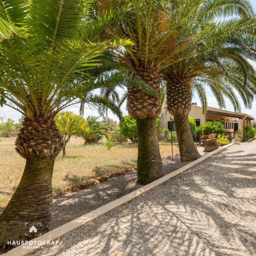 03 Mallorca Campos Palmtrees Termin